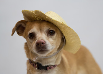cute dog face with hat on
