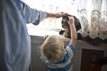 Young toddler reaching up to pat a cat sitting on an indoor windowsill.