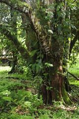 Epiphytes, or plants that grown on plants, are common in a tropical ecosystem.