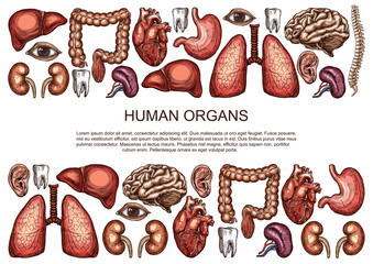 Human organs vector sketch body anatomy poster