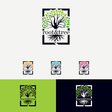 Root and Tree Logo Designs Template
