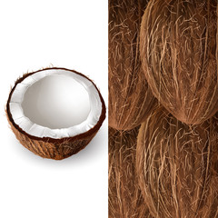 Coconut. Vector illustration