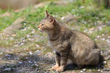 homeless cat at kyoto japan