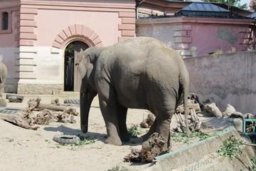 Elephant photography art in zoo wild life