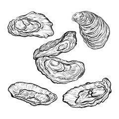 Oyster shell set. Engraved style. Isolated on white background. Vector illustration