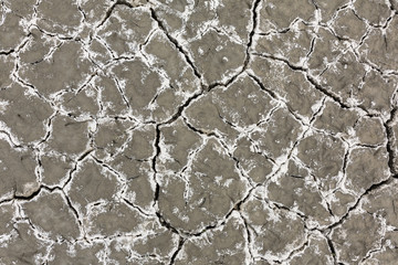 The salt shows through the earth. Dry cracked soil background. Cracked mud pattern.