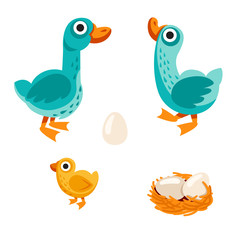 farm birds family cartoon flat illustration. goose, duck and egg. Vector illustration isolated on white background