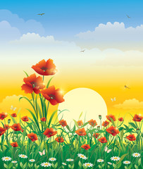 Summer landscape with poppies at dawn