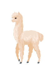 Vector image of cute alpaca in cartoon style. Colorful illustration isolated on a white background