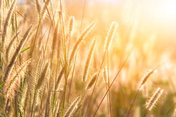 meadow in warm summer