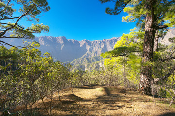 Forest in caldera of Taburiente, island of La Palma, Canary Islands