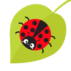 Cute cartoon lady bug sitting on green leaf. Cute icon. Cartoon funny character. Smiling face. White background. Isolated. Baby illustration. Flat design.