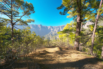 Forest in caldera of Taburiente, island of La Palma, Canary Islands