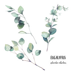 Watercolor eucalyptus branches with round leaves set. Hand painted floral clip art: objects isolated on white background.