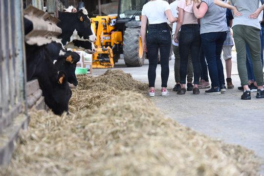jeune ferme agriculture education enseignement vache