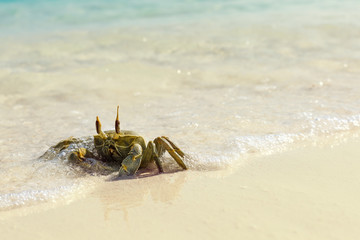 Ghost crab on white sandy beach