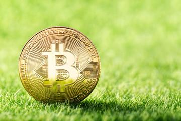 Golden coin of Bitcoin on green grass background