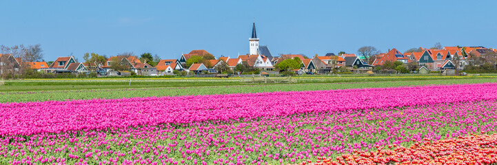Web banner Den Hoorn a small village on the wadden islands Texel in the Netherlands, with colourful tulips in the front Wall mural