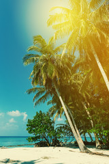 Coconut palm trees on sea view