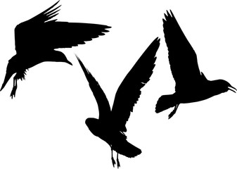 set of three gulls black silhouettes