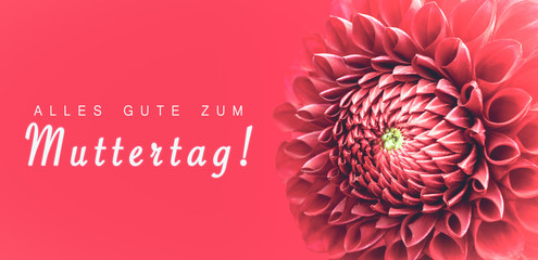Alles Gute zum Muttertag! (text in German: Happy Mothers's Day!) and pink dahlia flower details macro photo as border frame with wide banner background and message text.