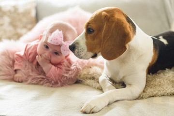 Baby girl with a beagle dog