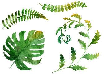 watercolor drawing of tropical leaves