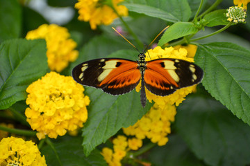 Colorful orange butterfly on a flower
