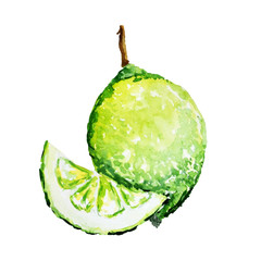 Watercolor lime isolated on a white background
