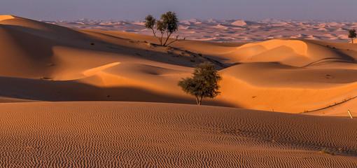 Wüste der Vereinigten Arabischen Emirate
