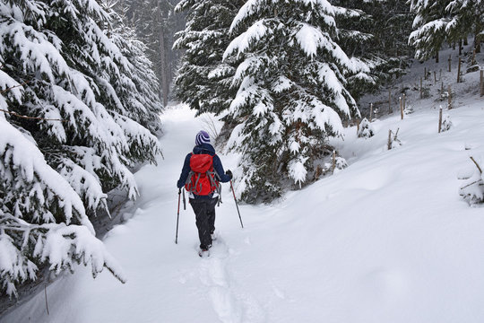 Woman with red backpack snowshoeing in light snowfall through a forest. Bavaria, Germany