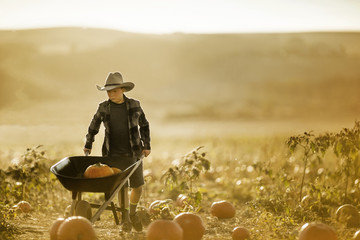 Young boy pushing a wheelbarrow of pumpkins in a field.