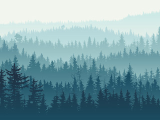 Horizontal illustration of blue coniferous forest.