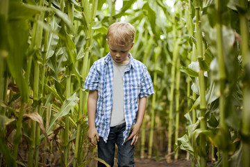 Young boy standing in a corn maze.