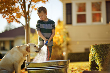 Young boy watching his dog drink from a running hose while he fills up a tub in the backyard.