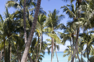 caribbean dream, cuba