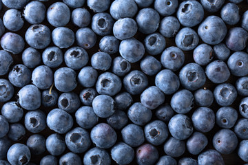 Ripe and juicy fresh picked blueberries closeup.