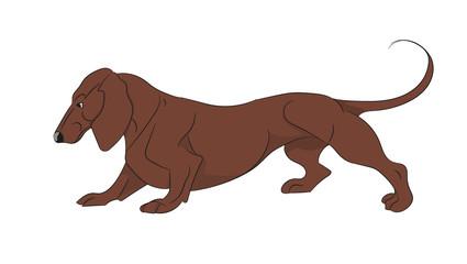 cartoon dachshund
