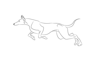 dog running, lines, vector