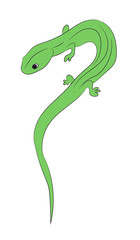 lizard color vector