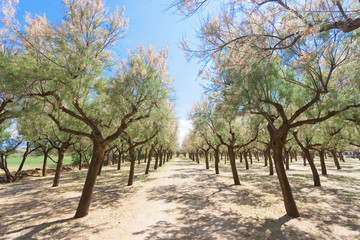 Spiaggia Terme, Apulia - Camping site within a lot of beautiful trees
