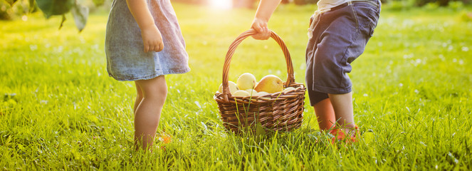 close up. Children in the garden with a basket of apples. Banner, background