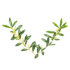 Green leaves Floral flat lay Olive tree branches white background