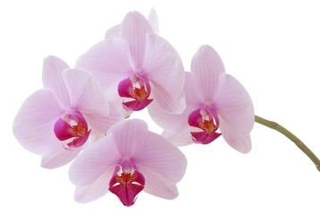 pretty orchid flowers close up