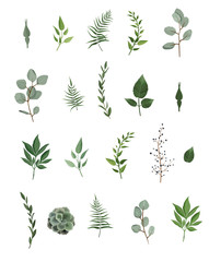 Vector designer elements set collection of green eucalyptus, art foliage natural leaves herbs in watercolor style.