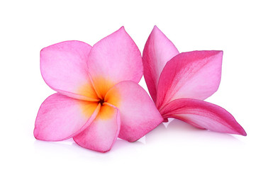 pink frangipani flower isolated white background