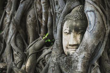 The root around the head of buddha at wat mahathat temple,AYUTTHAYA THAILAND.