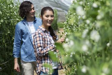 スナップエンドウを収穫するカップル