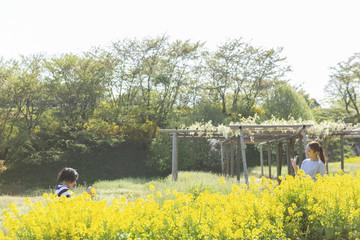 菜の花畑の男女