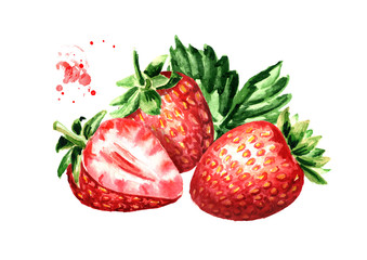 Ripe berries strawberry. Watercolor hand drawn illustration  isolated on white background